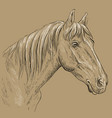 horse portrait-17 on brown background vector image vector image