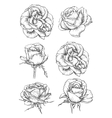 Blooming rose flowers and buds sketches vector image