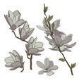 color drawing of a branch of magnolia with flowers vector image vector image