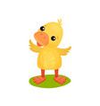 cute little yellow duckling character standing on vector image vector image