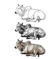 Resting white cowAmerican Brahman vector image vector image