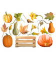 set of pumpkins with flowers and leaves vector image