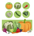 vegetables fresh raw ingredients vector image vector image