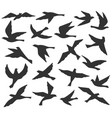bird silhouettes flying birds flock animal vector image