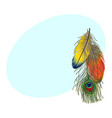 hand drawn set of colorful bird feathers parrots vector image