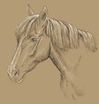 horse portrait-18 on brown background vector image