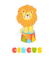 lion sitting in a circus arena isolated on white vector image