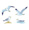 seagulls - flying sitting and swimming vector image vector image