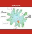 amoeba vector image vector image