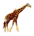 Colored hand drawing giraffe vector image vector image