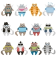 Dressed colorful cute cats vector image vector image