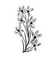 flower set herbarium beautiful design element vector image vector image