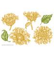 set hand drawn pastel sunflower vector image