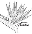 bird paradise hand drawn social media banner vector image
