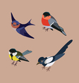 forst birds vector image