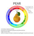 infographics pear vector image vector image