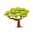 oak green tree icon vector image vector image