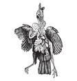 internal anatomy of birds vintage vector image vector image