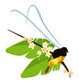 king of saxony bird-of-paradise with long feathers vector image vector image