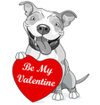 Valentine Pit Bull with Heart vector image vector image