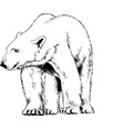 white polar bear painted with ink by hand vector image