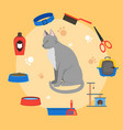 cartoon cat care concept vector image vector image