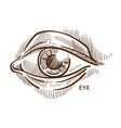 eye pupil and iris eyelid and eyeball with lashes vector image vector image