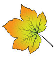image of cartoon maple leaf isolated on white vector image vector image