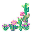 background with cacti and flowers vector image