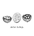 hand drawn of monk fruit on white background vector image vector image
