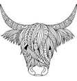 highland cow vector image vector image