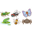 large set different insects on white background vector image