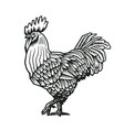 rooster or cock hand drawn in medieval engraving vector image vector image