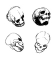 Skull from different views vector image