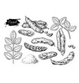 carob superfood drawing set isolated hand vector image vector image