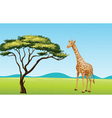 Giraffe by a tree vector image