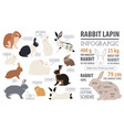 rabbit lapin breed infographic template flat vector image vector image