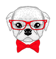 Cute pug boy portrait with bow tie hipster glasses vector image