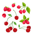 set of cartoon raspberries and cherries with green vector image