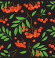 branch of ashberries isolated on black seamless vector image vector image