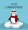 christmas card of cute baby penguin vector image vector image