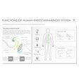 functions human endocananbinoid system vector image vector image