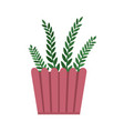 rosemary room plant pink pot vector image vector image
