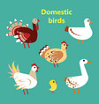 set of domestic birds vector image vector image