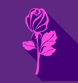 bright pink rose vector image vector image