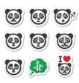 panda bear icons set - happy sad angry isolated vector image vector image
