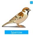 Sparrow learn birds educational game vector image