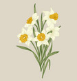 spring flowers daffodils vector image vector image