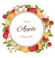 apples fruit collection poster banner vector image vector image