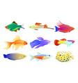 common and rare aquarium fish set vector image vector image